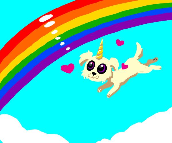 Unicorn dog loves a rainbow