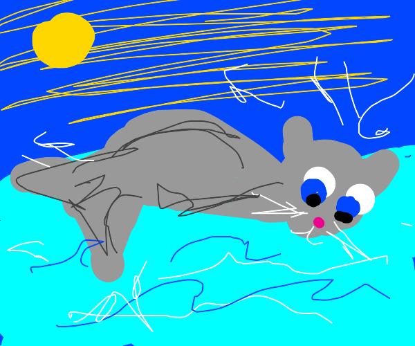 Cat-headed Dolphin