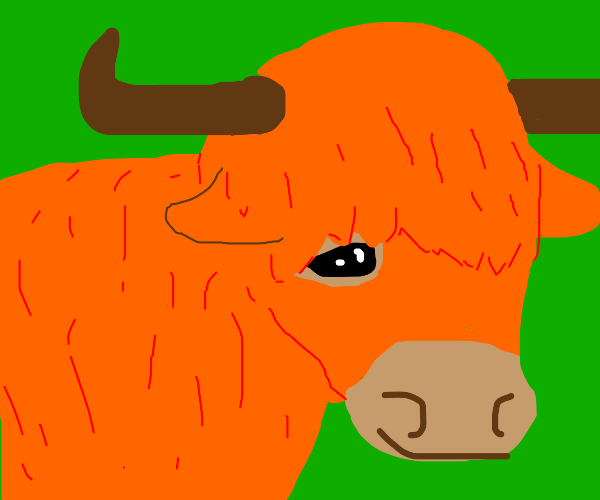 cow :)
