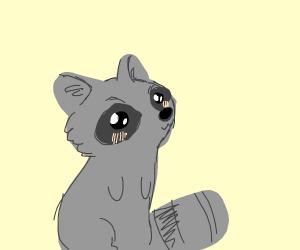 Blushing raccoon