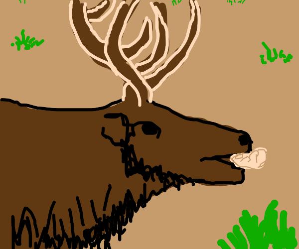 Elk eating a Dumpling