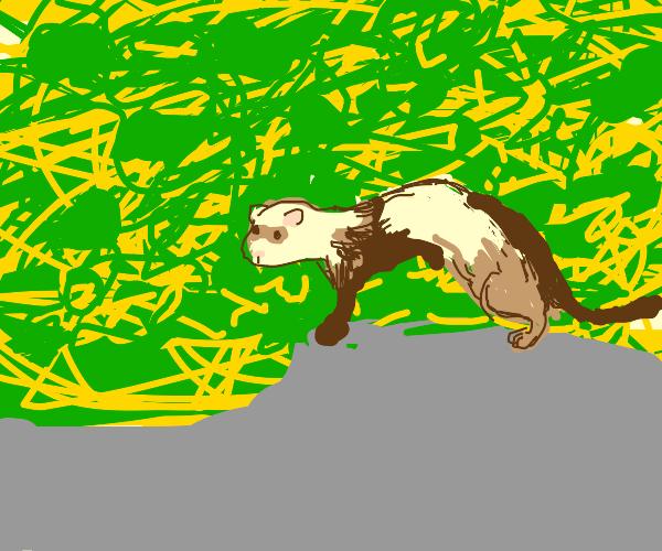 brown ferret