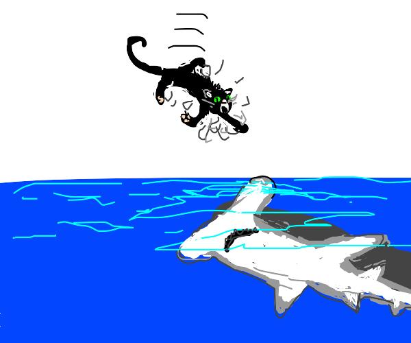 the cat vs fish war