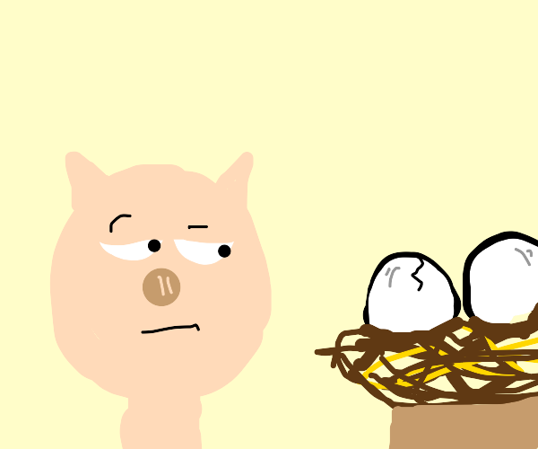pig looks at nest of eggs suspiciously