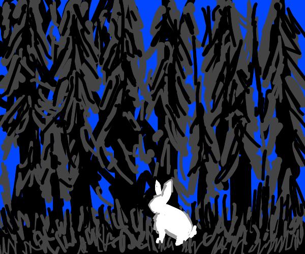 White rabbit in the dark forrest