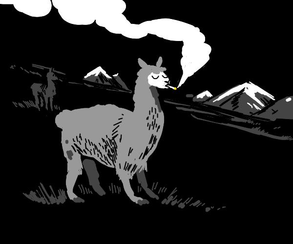llama smoking cigs