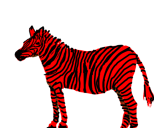 Red and black zebra