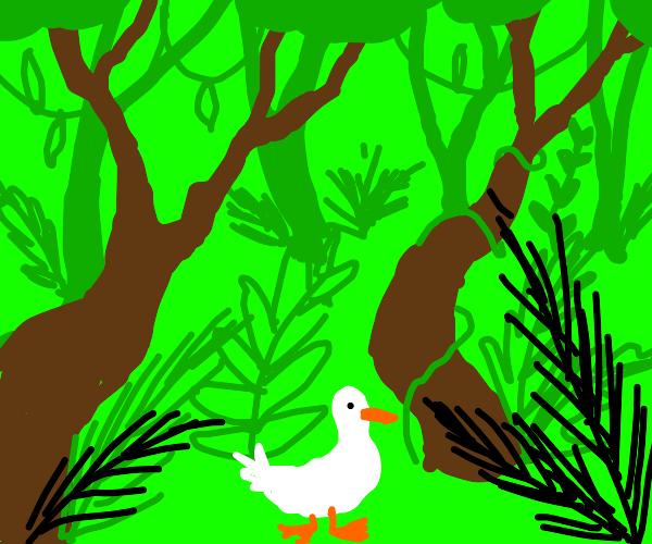 duck in jungle