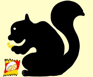 Black squirrel eating chips