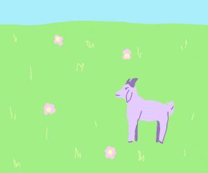 Pretty purple goat in a field