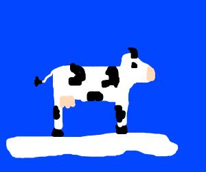 polar cow