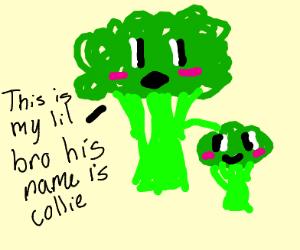 bro collie