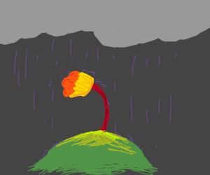Sad Muffin Flower