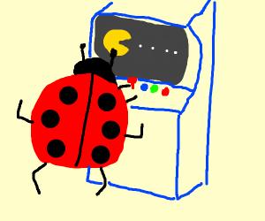 Ladybug playing at an Arcade