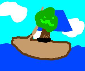 tree in boat