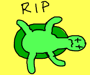 turtle dying
