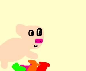 Piglet jumping over socks