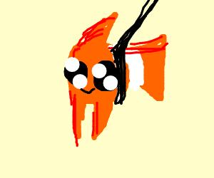 Pet Clownfish
