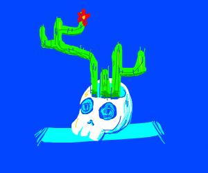 a skull cactus