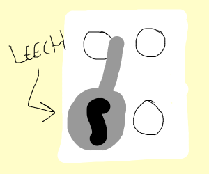 Leech Cook