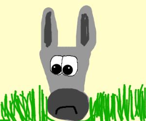 Sad donky
