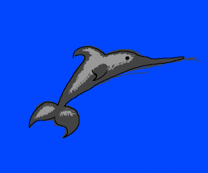 Sword nosed dolphin