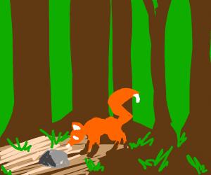Fox checks if it's pet rock is alive