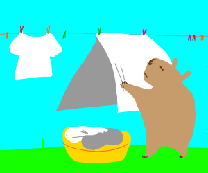 Capybara doing Laundry