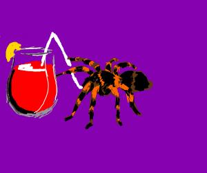 Tarantula Drinking