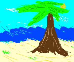Beach. Sea. Sun. Palm Tree.
