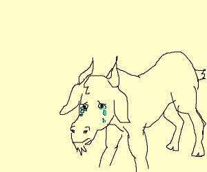 Crying Goat