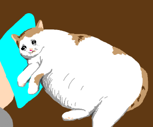 sad fat cat