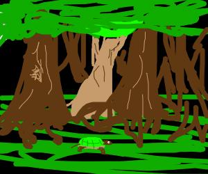 Tortoise walking through the deep dark wood