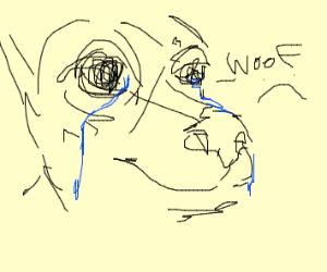 Sad dog - Drawception