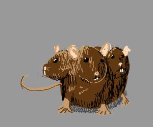 3- headed rat