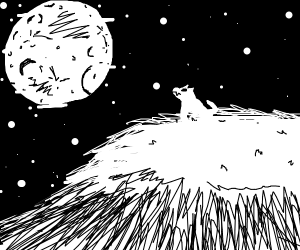 white wolf looking at the moon