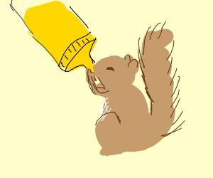 squirrel drinking mustard from bottle