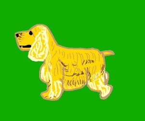 Yellow Cocker spaniel