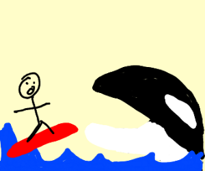 man surfs into killer whales mouth