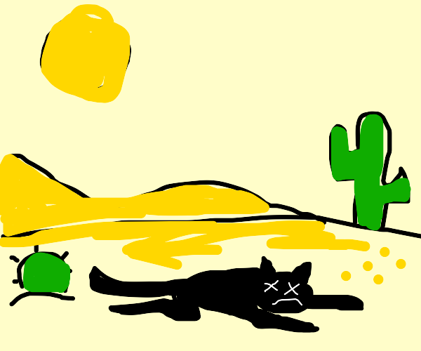 a cat died in the desert