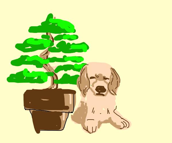 Bonsai Puppy