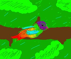 colorful bird singing