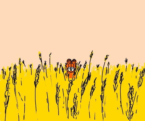 Garfield in wheat field
