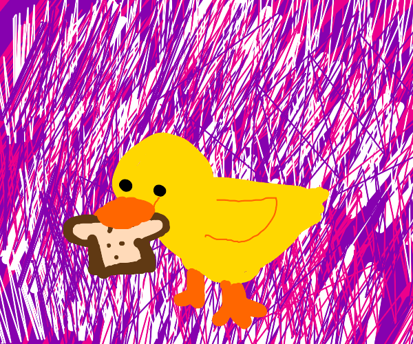 duck eating toast