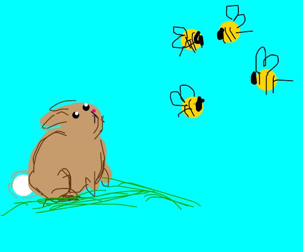 Bunny stares at bees
