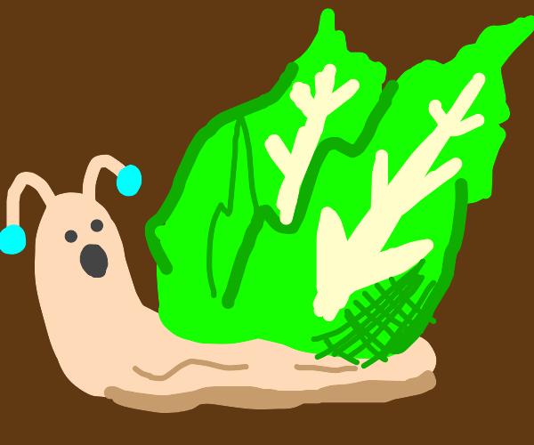 Snail made of lettuce