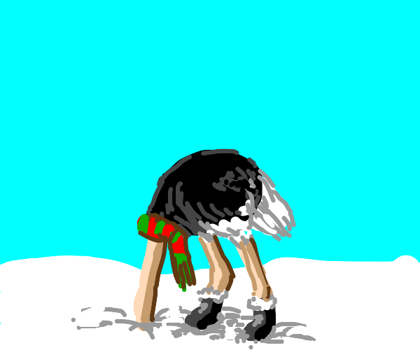 Ostrich hiding its head in the snow