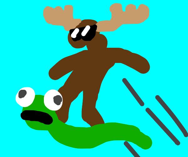 Moose rides a snake like a skateboard