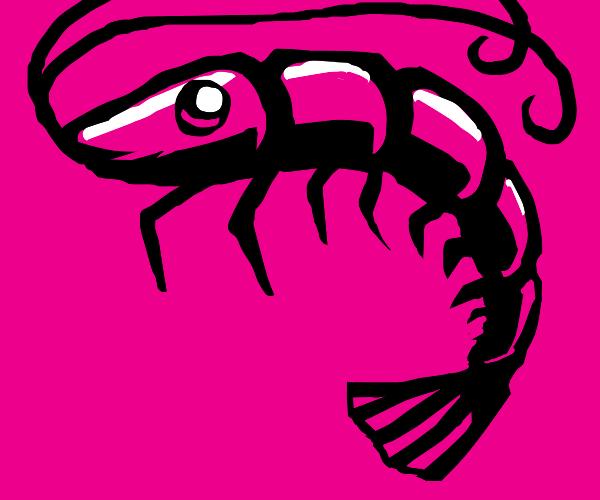 shiny, pink shrimp
