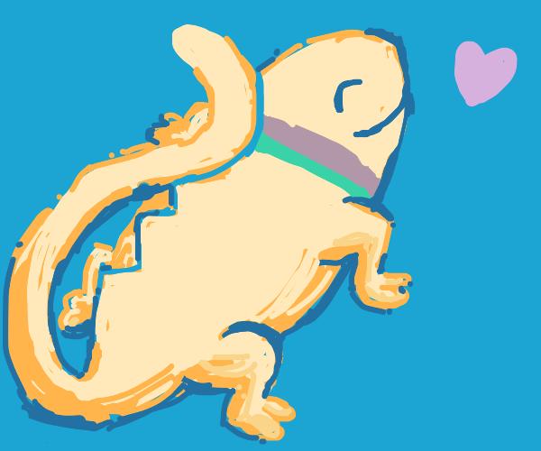 A loved lizard